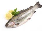 Ribe - sladkovodne