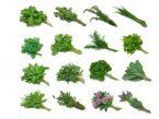 Kako pripravljamo jedi z zelišči?