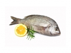 Ribe - morske