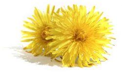 Najboljši recepti z zdravilnimi rastlinami in pleveli