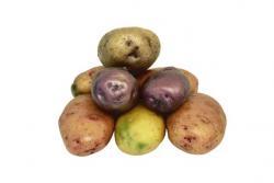 Najboljši recepti za jedi iz krompirja