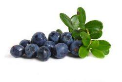 Najboljši recepti za jedi z borovnicami