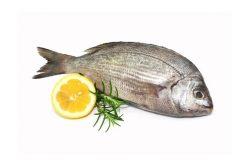 Najboljši recepti za jedi iz morskih rib