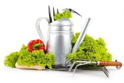 Najboljši recepti za jedi z vrta - sveže pripravljeno iz lastnega vrta