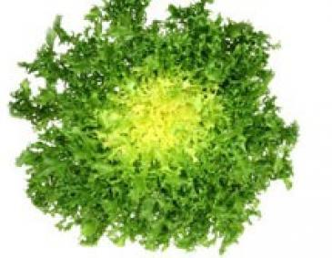 Endiviensalat Pflanzen Setzen : das k chengartenjahr im februar und passende rezepte ~ Whattoseeinmadrid.com Haus und Dekorationen