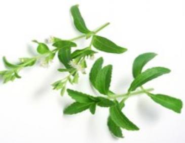 Stevia vollkorn kuchen