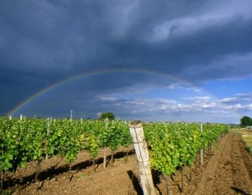 Austrian Wine: Regions & Grape Varieties