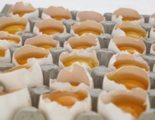 Wie Bewahrt Man Eier Auf Ichkocheat