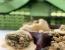 Božični korneti s polnilom iz bučnih semen