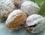 Polnjeni orehi