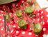 Kumarična bovla z ingverjem
